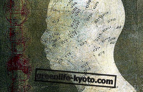 El mapa de acupuntura.
