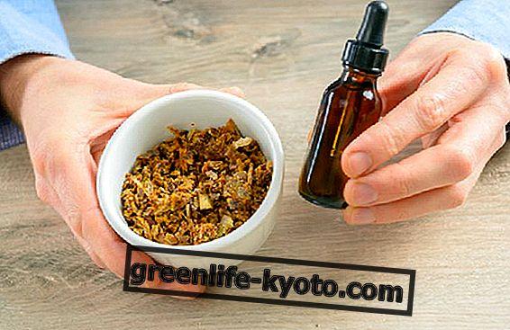 Měkký extrakt z propolisu, použití a jak na to