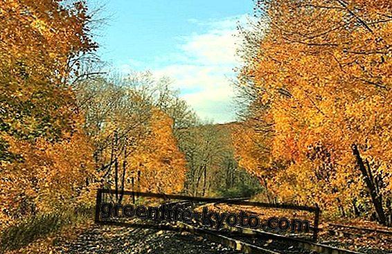 11月の自然の目的地