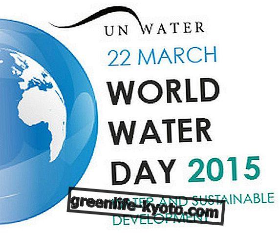Fenntartható fejlődés a világ víznapján