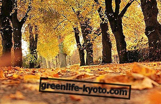राष्ट्रीय वृक्ष दिवस, जीवन के स्वामी