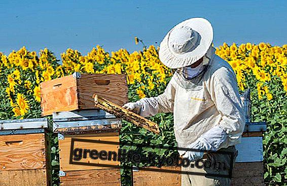 Смог и пчелы в Италии
