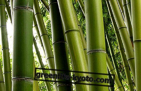 Ξύλο - το πρώτο από τα 5 στοιχεία του Φενγκ Σούι