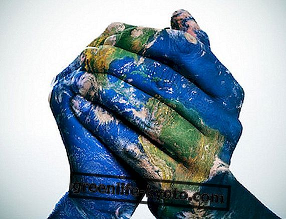 Solidariteit, mensenrechteninitiatieven