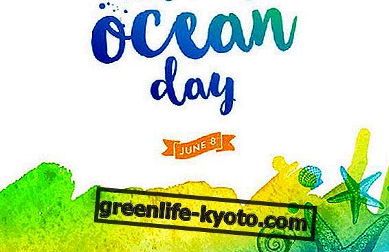 8 juni, World Oceans Day