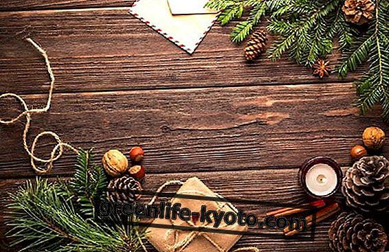Ecobio kosmeetika annab jõulude ajal: siin on retseptid