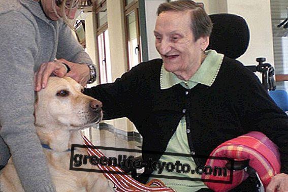 Psy w terapii zwierząt domowych