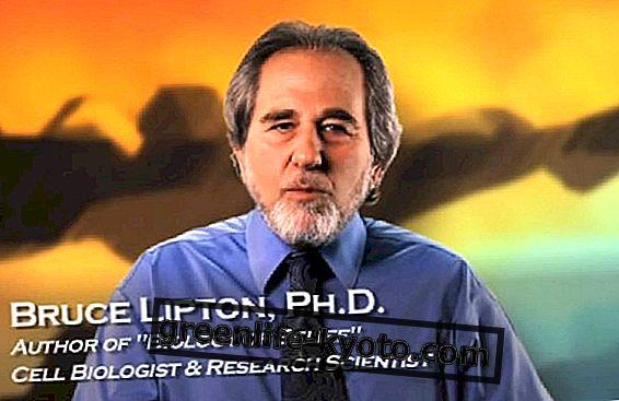 リプトン、宗教、科学、文化的クリエイティブ