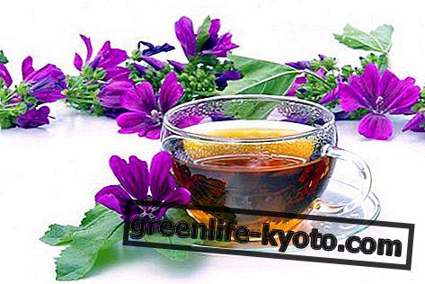 Natuurlijke producten voor zwangerschap: oliën, zepen en kruidenthee