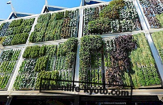 Kryžminė siena, ekologiškos žalios sienos
