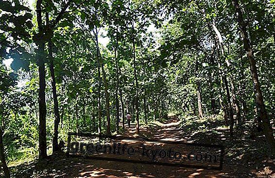 Vegaani mudelid metsas