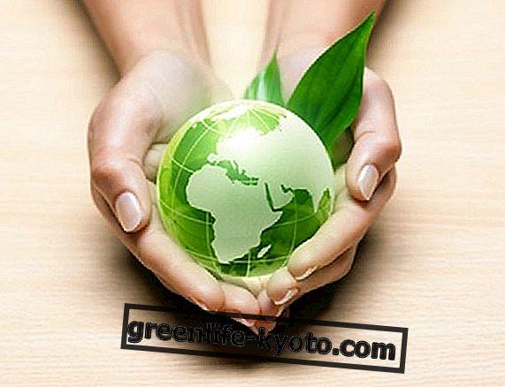 Vivir de forma ecológica sin demasiados sacrificios.