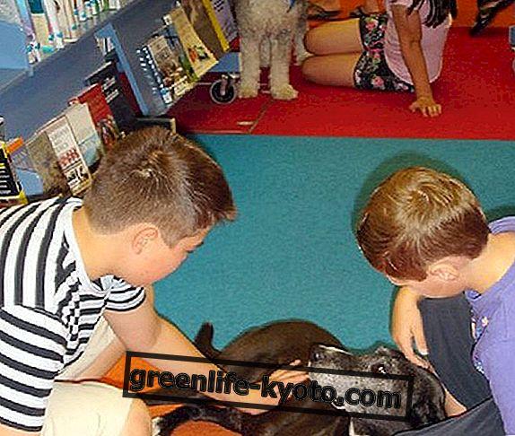 Terapia de mascotas en la escuela