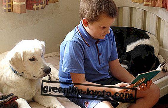 Djurterapi och autism