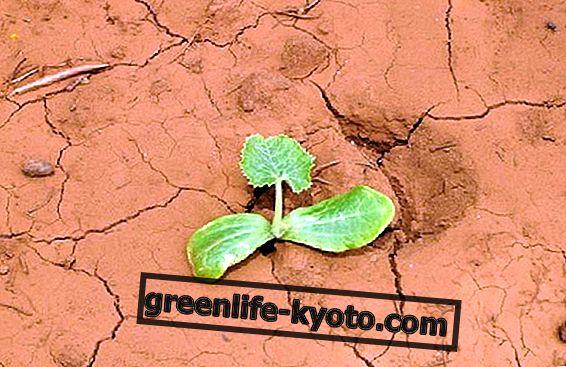 वनस्पति अंकुर: गाजर, लेट्यूस और आंगन को कैसे उगाया जाए