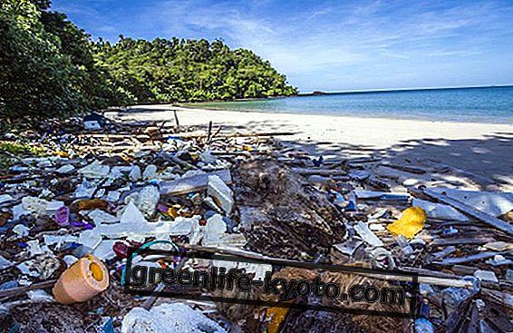 Le plastique jetable est interdit au Costa Rica