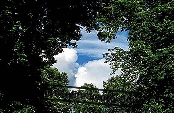 EcoTree, vlagajte v sajenje dreves