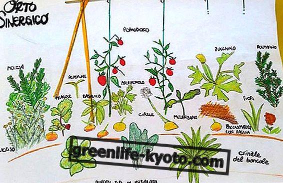 相乗作用のある庭:Gianna Nencioli(Associazione 1virgola618)とのインタビュー