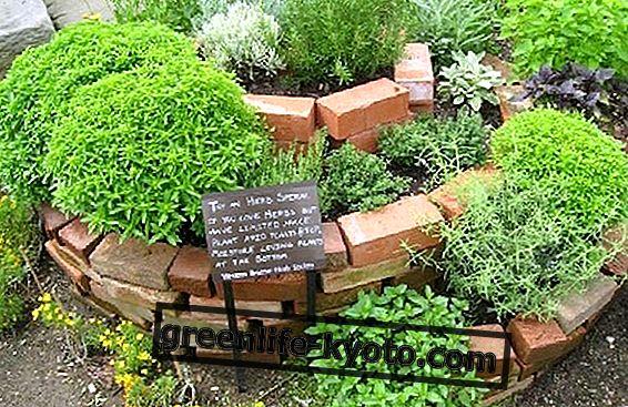 Faire la spirale d'herbes aromatiques, utiles et décoratifs