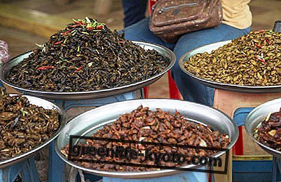 कंबोडियन भोजन: विशेषताएं और मुख्य खाद्य पदार्थ