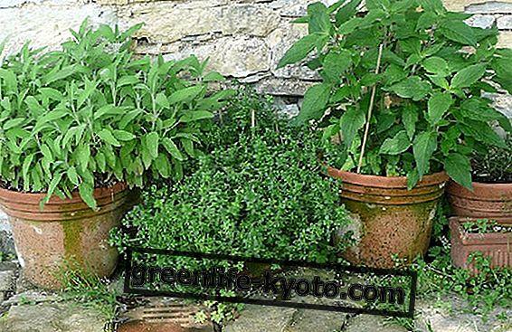 Cultivo de hierbas aromáticas en casa.
