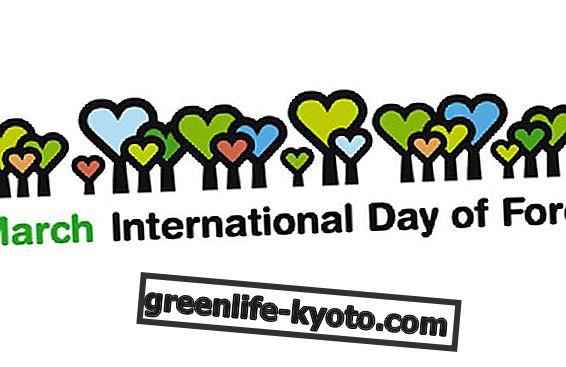 Día del Bosque: reflexionando sobre el cambio climático
