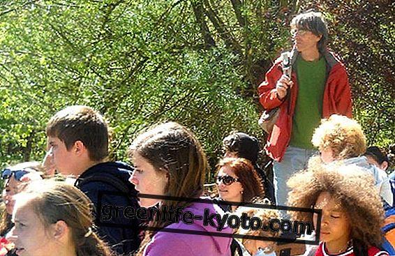 Parlez aux arbres et redécouvrez la nature
