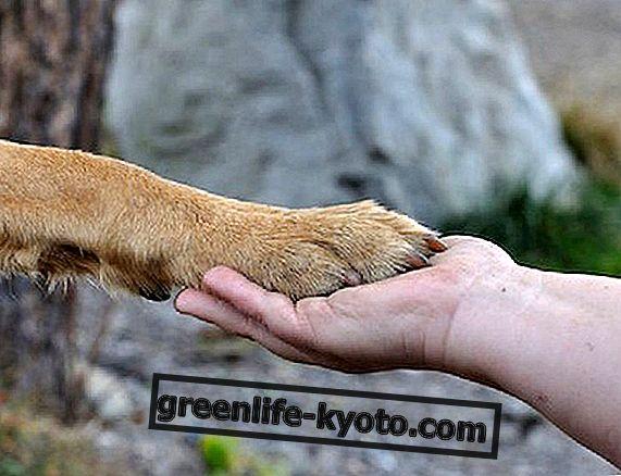 Terapia dla zwierząt domowych, kiedy i jak