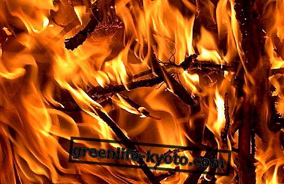 """Elementas """"Fire in Feng Shui"""""""