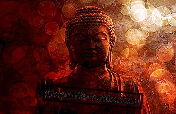"Rezension zu ""Walk like a Buddha"", dem Buch von Lodro Rinzler"