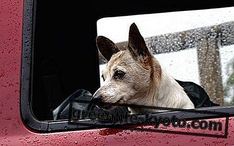Autode haige koer ja kass, kõik abinõud