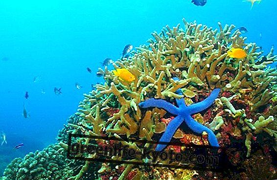 Palau i zabrana korištenja krema za sunčanje