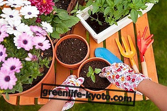 Do-it-yourself přírodní hnojivo