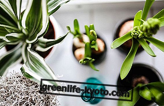 10 rastlin za čiščenje zraka doma