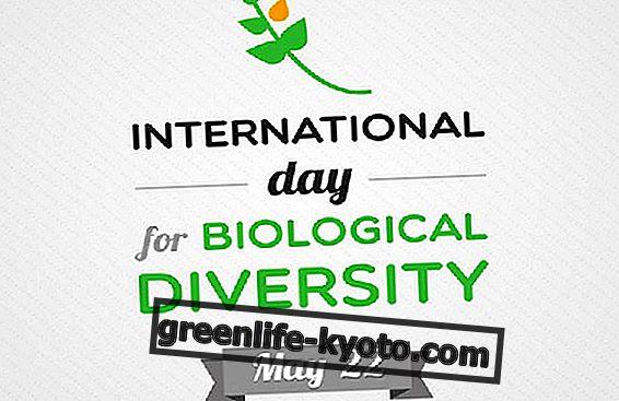 Promover la biodiversidad en su día.