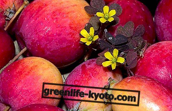Kosmetické použití jablečného octa