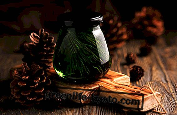 Cedar eeterlik õli koid
