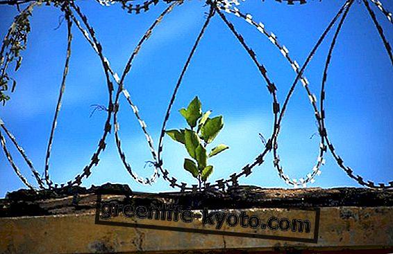 Fundación Parinaama: yoga u zatvoru