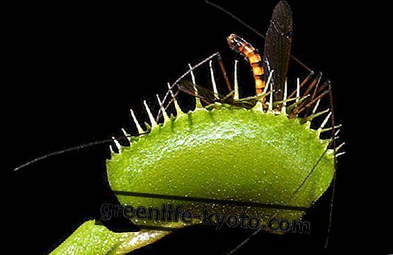 Hoe maak je een anti-mug ecologische val