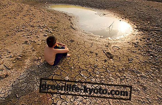 Acțiunile concrete împotriva schimbărilor climatice, avem doar 12 ani