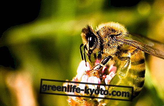 天然の蜂蜜ベースの化粧品による甘い美しさ