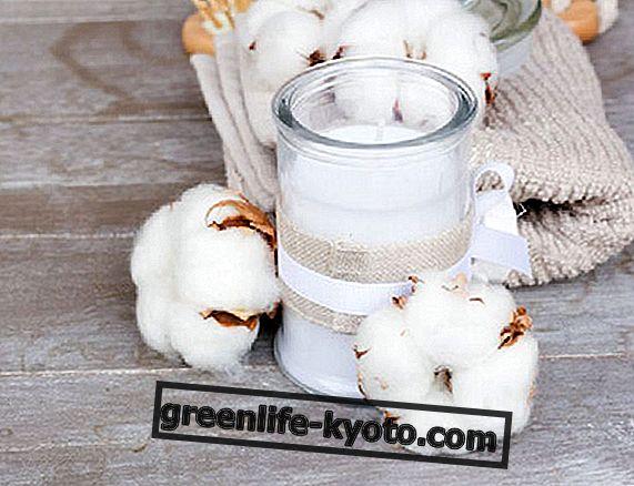 त्वचा के लिए कपास का तेल: 2 कॉस्मेटिक व्यंजनों