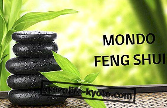 El mundo visto a través de los ojos de un consultor de Feng Shui.