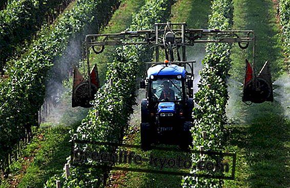 Glyphosat bei grünem Licht gemäß EU