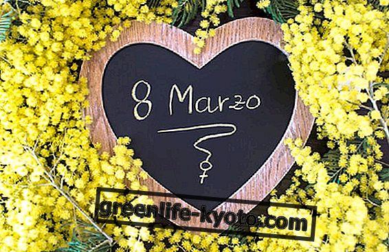 8. března Den žen, jak jej utratit