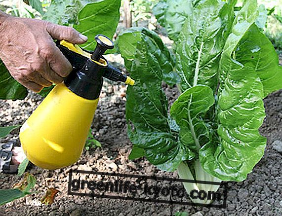How to make natural insecticides