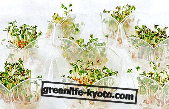 Lai veiktu augu, jums ir nepieciešams pārpalikums