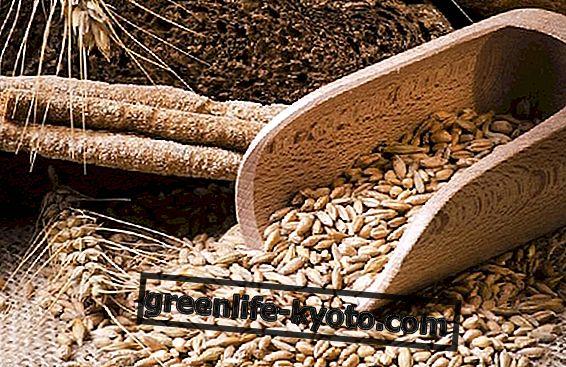 Nouzový stav hladu: bezpečnost potravin u malých zemědělců