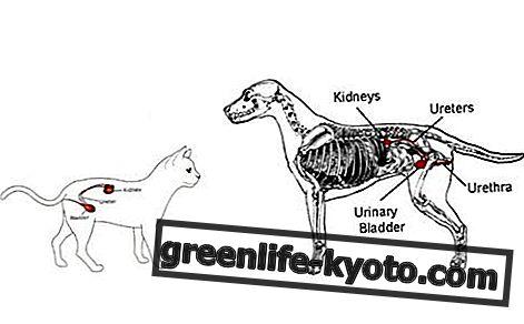 Selhání ledvin u psů a koček, všechny léky
