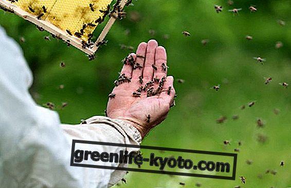 Gezondheid van bijen en het lot van onze planeet
